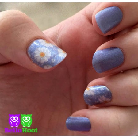 Blue Sky Daisies